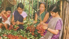 Khasi women with their harvest, North India